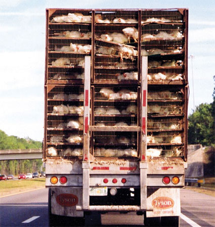 a Tyson chicken truck ... would you feed your child THIS?